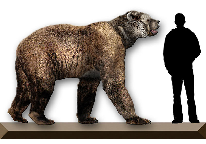 Arctodus-Simus-short-faced-bear