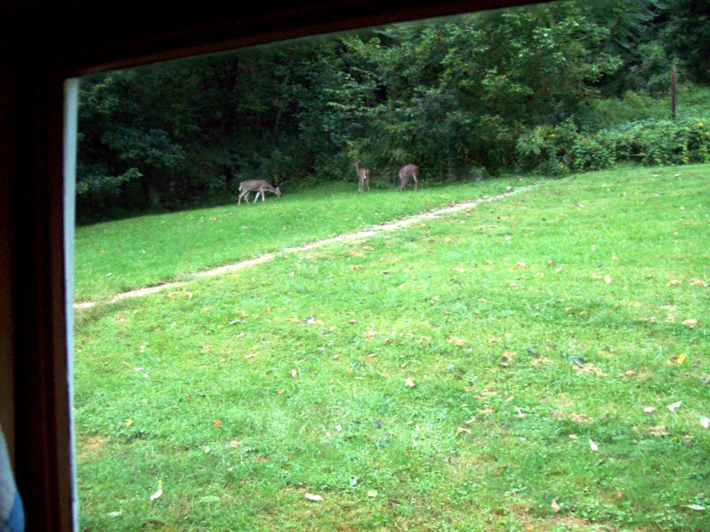 3-deer-backyard-from-kitchen-7-am-sat-sept-14-2013-681-canal-road-apollo-pa