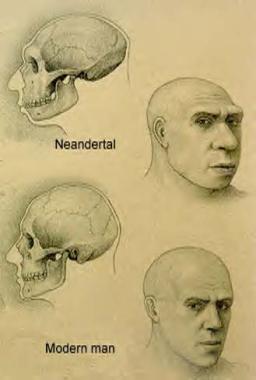 comparing-cranium-Cro magnon-to-neanderthal