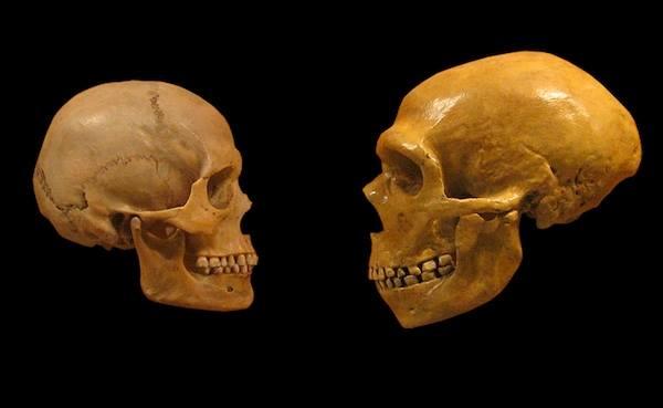 cro-magnon-neaderthal-skull-faceoff