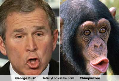 george-bush-chimp