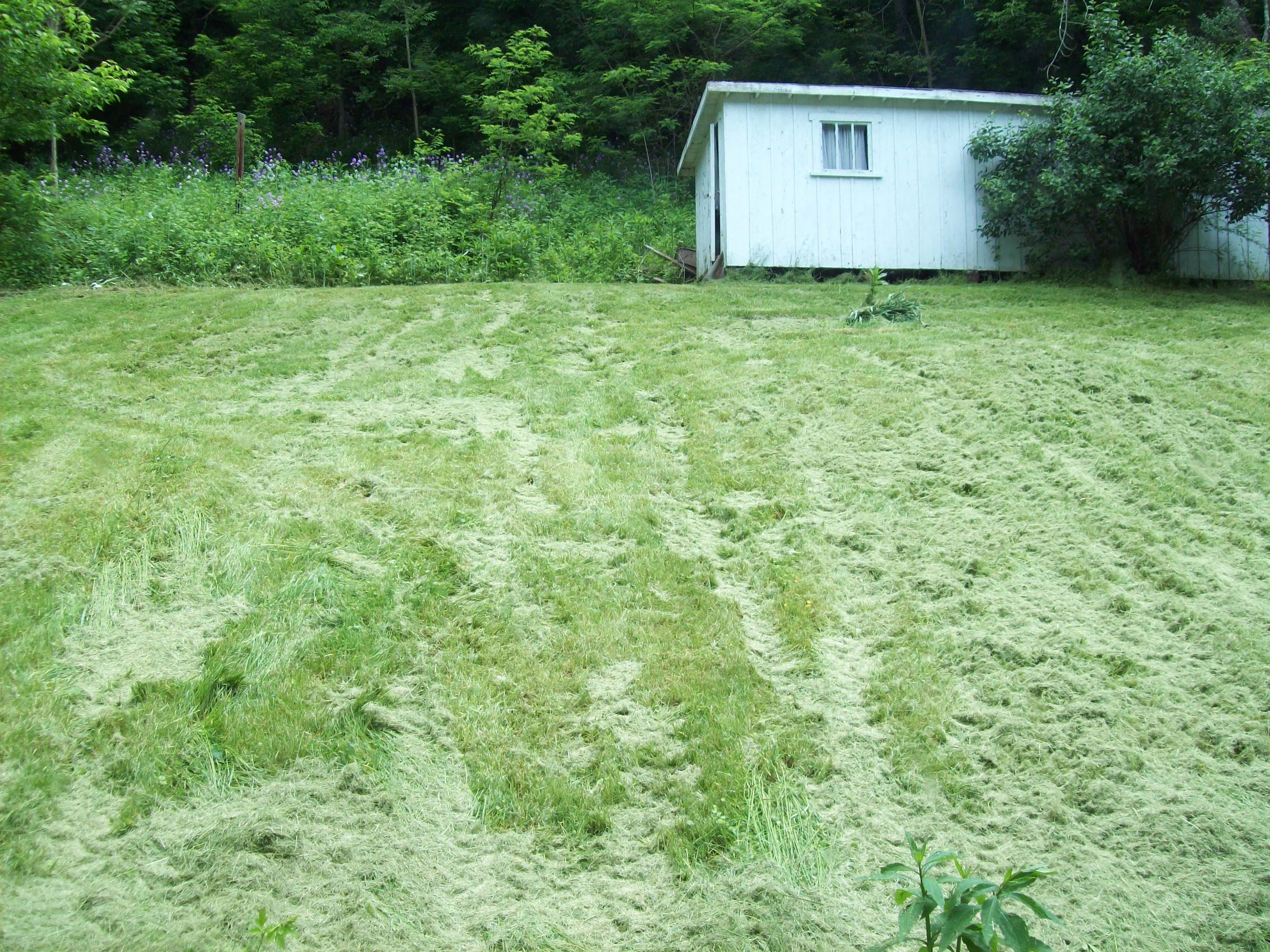http://johndenugent.com/images/grass-clipppings-back-lawn.jpg