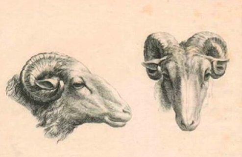 humanimal-sheep