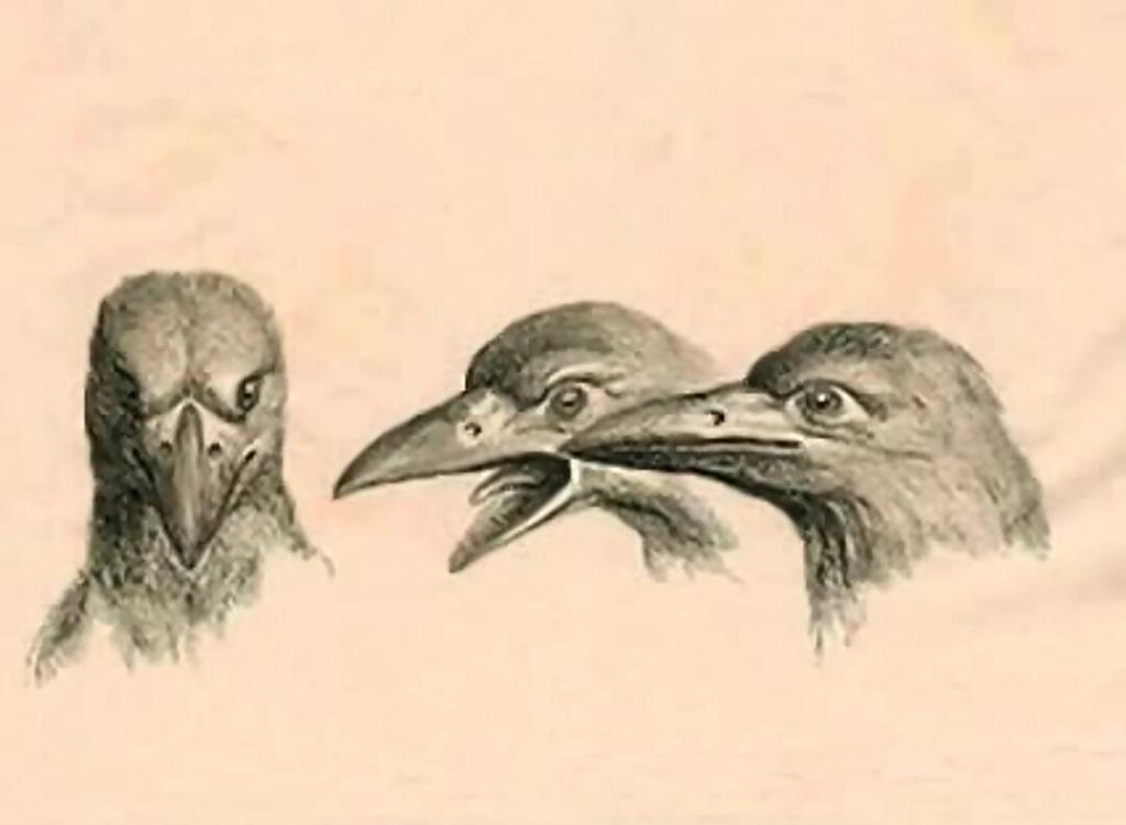 humanimals-birds