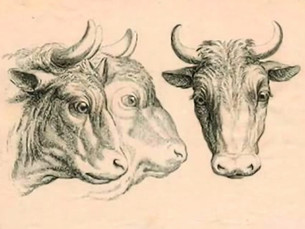 humanimals-cattle