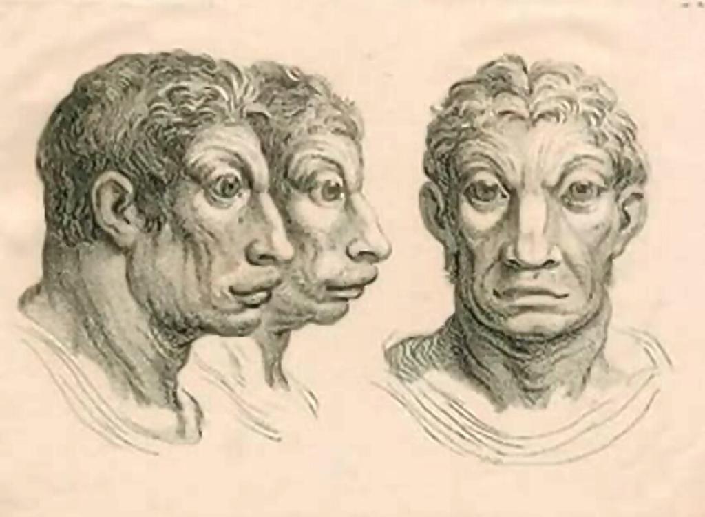 humanimals-cattle-man