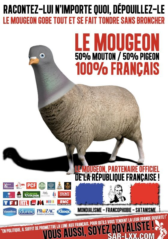 mougeon-mouton-pigeon-french