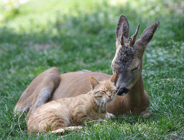 orange-cat-and-deer-stroke-whiskers