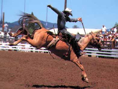 philomath-oregon-rodeo