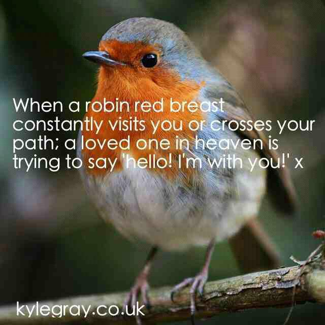 robin-red-breast-visit-means-loved-one