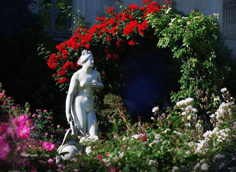 venus_genitrice_roseraie_jardin_plantes-paris