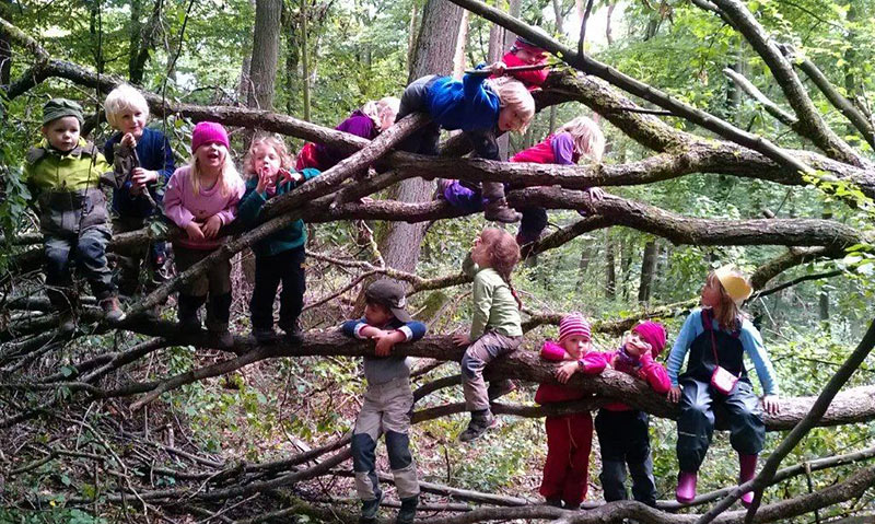 waldkindergarten-climbing-trees