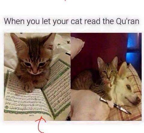 when-cat-reads-koran-slits-dog-throat